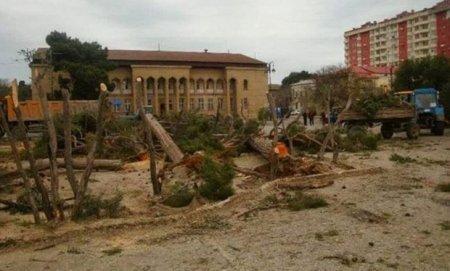 Bakıda ağacları kəsib restoran tikirlər – ŞİKAYƏT + FOTO